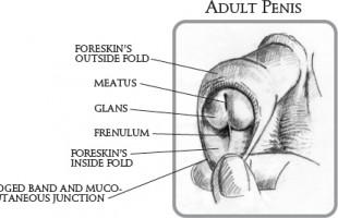 La Secchezza della Pelle del Pene e del Glande, perchè?